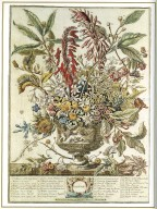 January, Twelve Months of Flowers, 1745, London, John Bowles