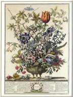 February, Twelve Months of Flowers, 1745, London, John Bowles