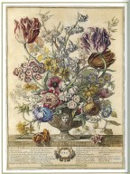 April, Twelve Months of Flowers, 1745, London, John Bowles