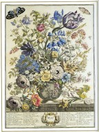 May, Twelve Months of Flowers, 1745, London, John Bowles