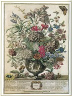 July, Twelve Months of Flowers, 1745, London, John Bowles