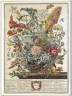 August, Twelve Months of Flowers, 1745, London, John Bowles