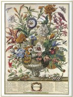 September, Twelve Months of Flowers, 1745, London, John Bowles