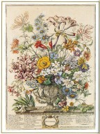October, Twelve Months of Flowers, 1745, London, John Bowles