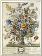 November, Twelve Months of Flowers, 1745, London, John Bowles