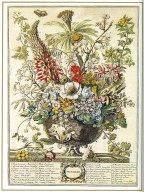 December, Twelve Months of Flowers, 1745, London, John Bowles
