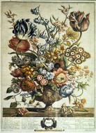 Robert Furber's Flowers - Twelve Months of Flowers, April