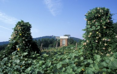 Monticello, Vegetable Garden and pavilion with Vigna Caracalla and squash