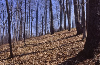 Monticello, site of 1-in-10 Road bed, before restoration