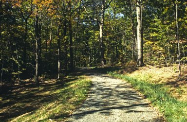 Parkway, fall