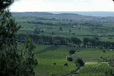 Lanquedoc, vines and farms