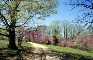 Monticello, First Roundabout, with spring redbud