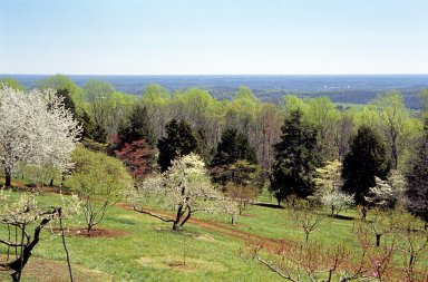 Monticello, North Orchard, spring