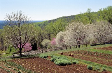 Monticello, Vegetable Garden with North Orchard, spring