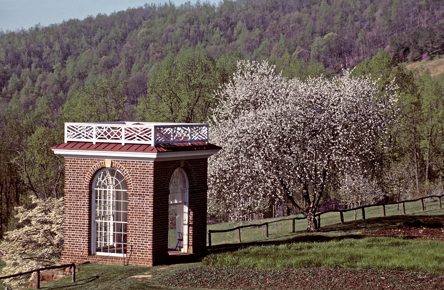 Monticello garden pavilion and blooming prunus in orchard