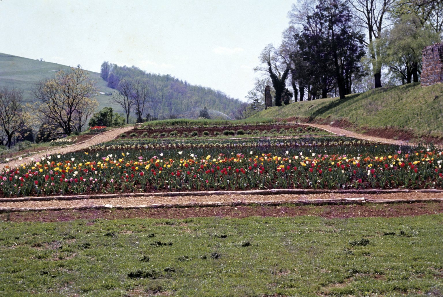 Monticello, vegetable garden, early restoration (planted with tulips)