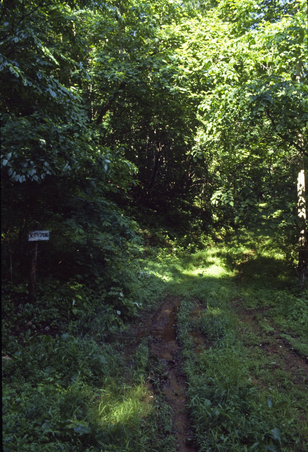 Monticello, Road at North Spring